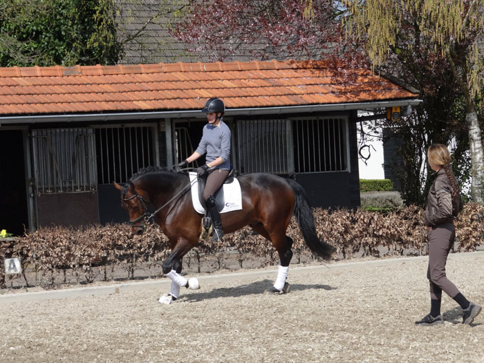 Training Dressage Horses